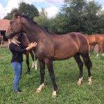 Qintofino - Pferdehof am Weiler