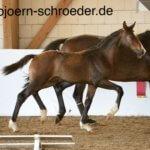 Quintofino - Pferdehof am Weiler