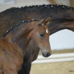 Quintoro - Pferdehof am Weiler - steht zum Verkauf!