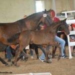 Märchenfee - Pferdehof am Weiler